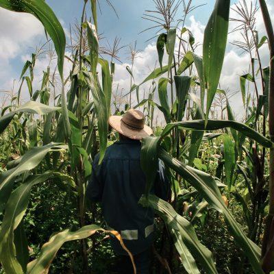 Técnico em Agropecuária – Bragança Paulista